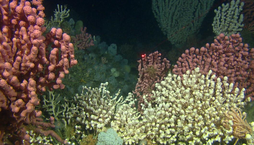Korallene utenfor kysten vår er bosted for et rikt dyreliv.