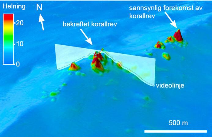 Slik ser det ut når forskerne finner korallrev på havdypet utenfor Norge. Om lag halvparten av de 200 000 forekomstene anses å ha høy pålitelighet.
