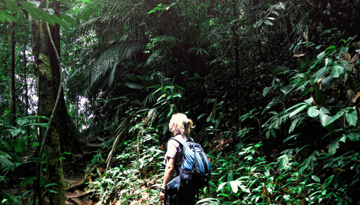 Kommentar: - Reis til regnskogen!