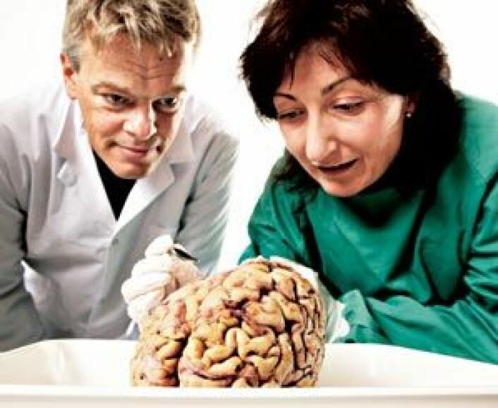 Edvard og May-Britt Moser, hjerneforskere ved NTNU, forsøker å finne ut nøyaktig hvor i hjernen hukommelsen sitter. Senter for hukommelsesbiologi ble opprettet i 2002. Fem år senere ble det utnevnt til det 15. Kavli-instituttet i verden: The Kavli Institute for Systems Neuroscience. (Foto: Geir Mogen/NTNU Info)