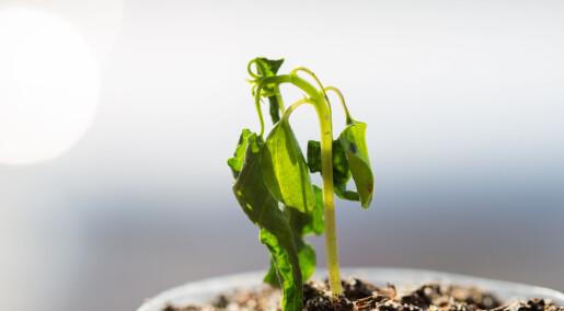 Planter skriker når de er stresset, ifølge ny studie
