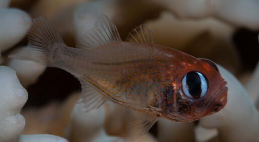 Se noen av de nye artene som ble oppdaget i 2019