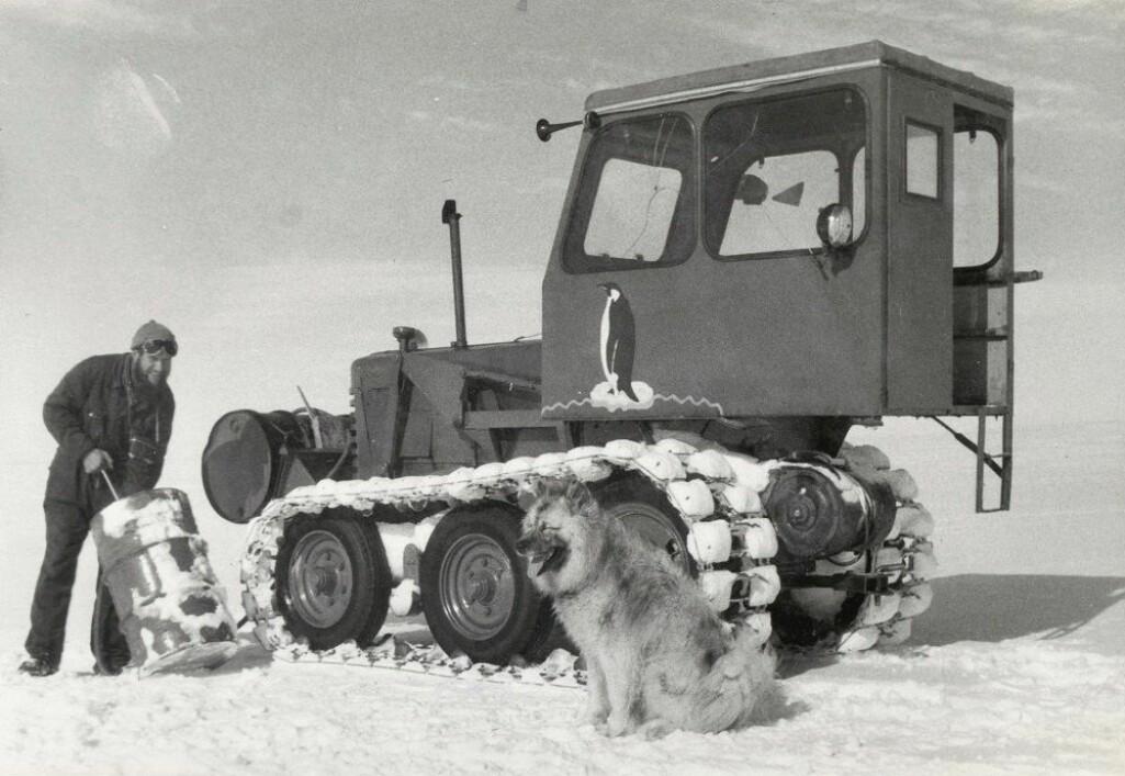 I dag er hunder strengt forbudt i Antarktis i frykt for smitterisiko ved innføring.