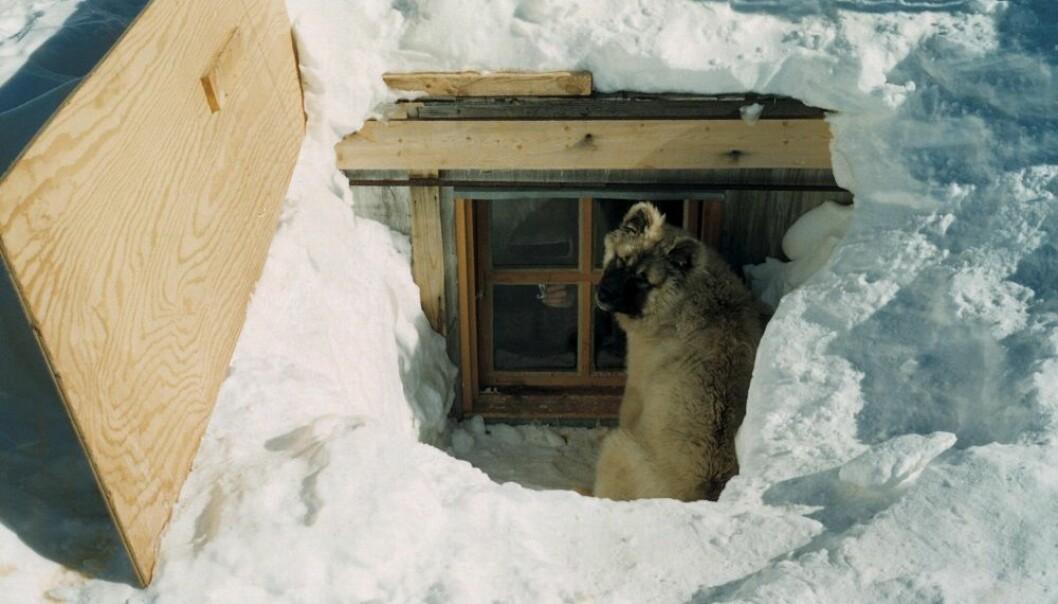 Biggen lurer i kjøkkenvinduet på Norway Station.
