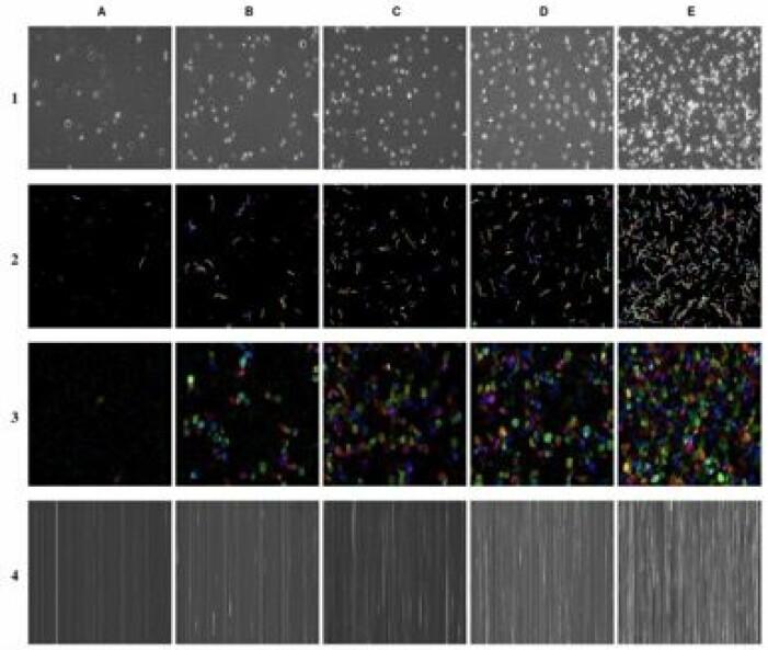 Eksempler på bilder fra videoer av sædprøver med forskjellige konsentrasjoner (kolonner) og de fire forestillinger som brukes til å trene de nevrale nettverksbaserte algoritmer (rader). Bilderepresentasjon; 1) original video, 2) sparsom optisk flyt, 3) tett optisk flyt og 4) vertikal rammematrise.