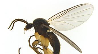 Tusenvis av nye arter oppdaget i Norge