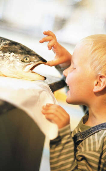 (Foto: Arild Juul/Eksportutvalget for fisk)