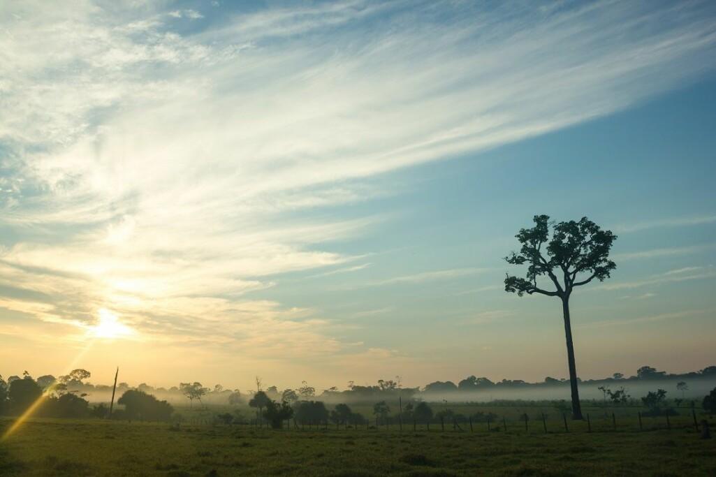 Jo mer fragmentert skogen blir, dess mer øker problemene.