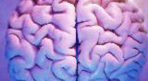 Virus viser vei i hjernen