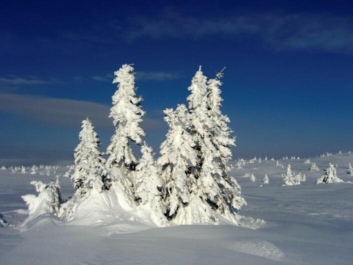 Vakker i vinterdrakt.