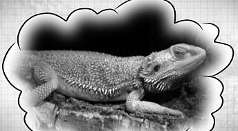 Dinosaurene kan ha hatt samme søvnmønster som oss