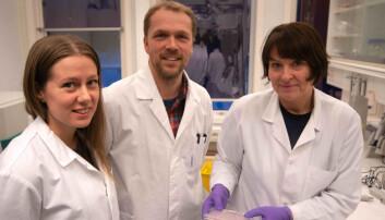 Molekyl fra havet dreper brystkreftceller