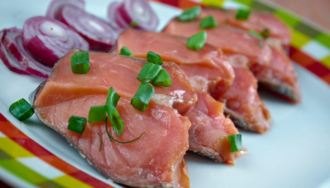 Bakterier spiller en viktig rolle i raking av fisk. Men det betyr også at rakfisken kan inneholde ubudne gjester.