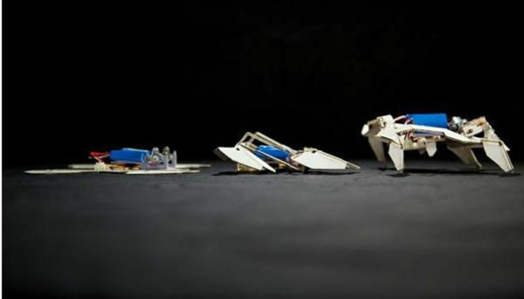 Robotens transformasjon fra flat til gående. (Foto: Seth Kroll, Wyss Institute)