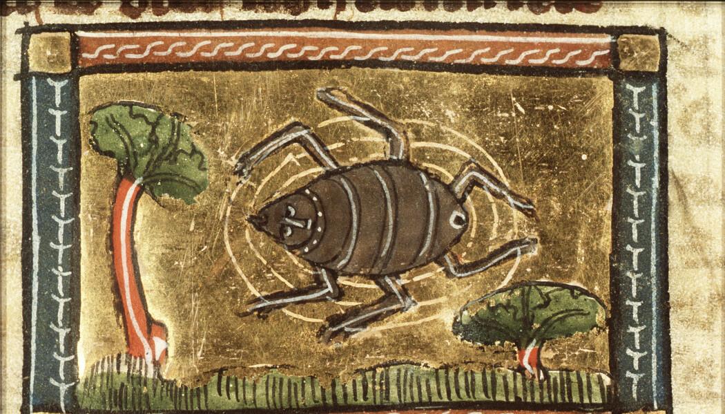 Det ble funnet flere typer blodsugere i prøvene fra Follobaneprosjektet, og selv om de ikke var like store som på denne illustrasjonen fra 1340 må de ha vært plagsomme nok å bo sammen med.