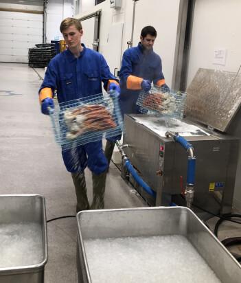 Masterstudent Øyvind Jøstensen og jeg koker krabbe. Her er de på vei til å avkjøles i isvann.