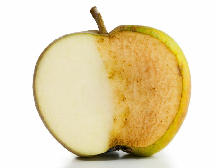 Det samme enzymet som sørger for bruning på epler, gir snøkrabben misfarging.