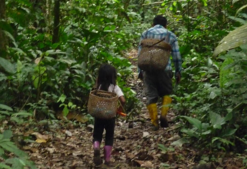 Denne jenta i Equador forbrenner ikke flere kalorier enn en vestlig nettbrett-unge, ifølge ny forskning. Må vi kaste hele vår forståelse av energibruk i kroppen?