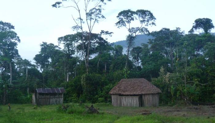 Typisk boplass for Shuarfolket i Equador.