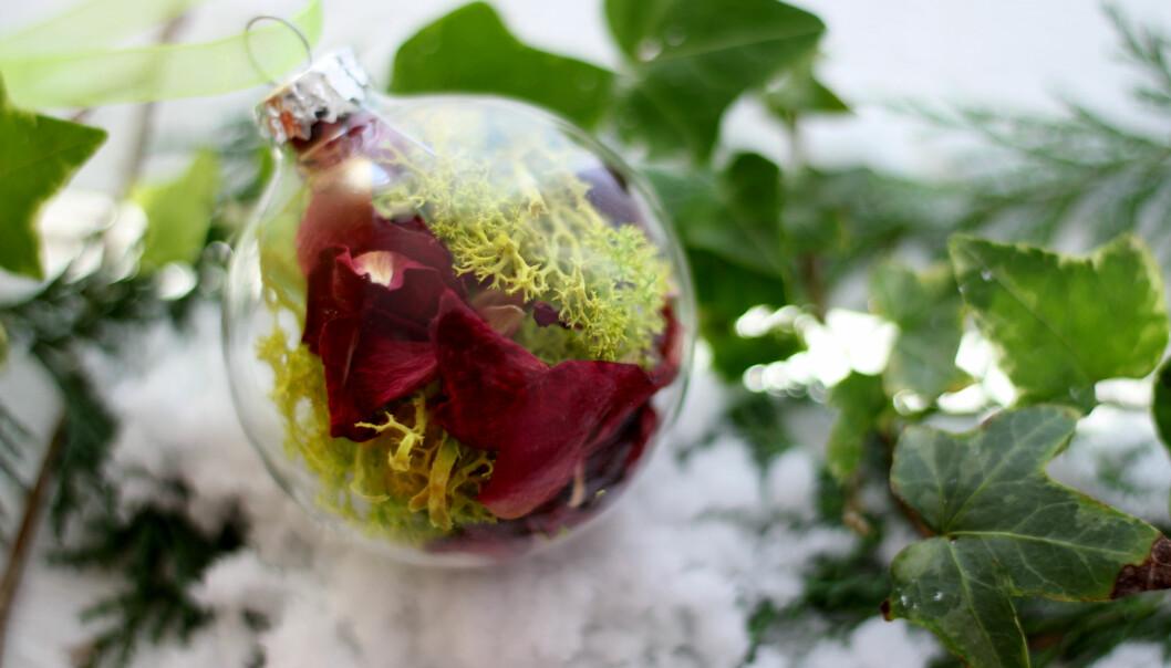 Kvitkrull har ei lang historie som julepynt. No dukkar denne laven opp i stadig nye samanhengar.