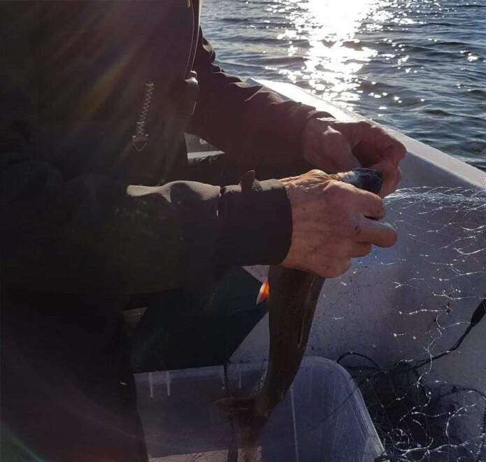 Tana kommune har ansatt en aktivitør som tar med seg gamle ut og tilbyr dem aktiviteter som har vært viktig i livet deres, for eksempel å fiske.