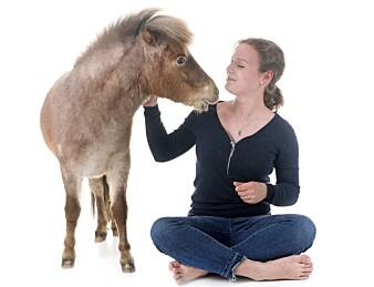 Hester kan være veldig store, men de kan også være veldig små.