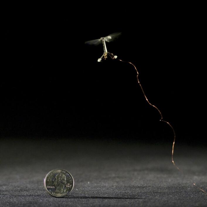 Roboten RoboBee flyr med superraske, nesten usynlige vingeslag. (Foto: Kevin Ma and Pakpong Chirarattananon, Harvard University)