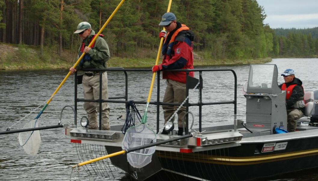 Sjokkerende fartøy for fiskeforskere