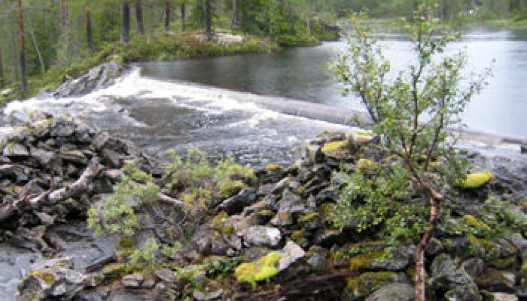 På denne øya i Kopperåa, Meråker, har det vært drevet smelting av kopper i middelalderen. Lars F. Stenvik