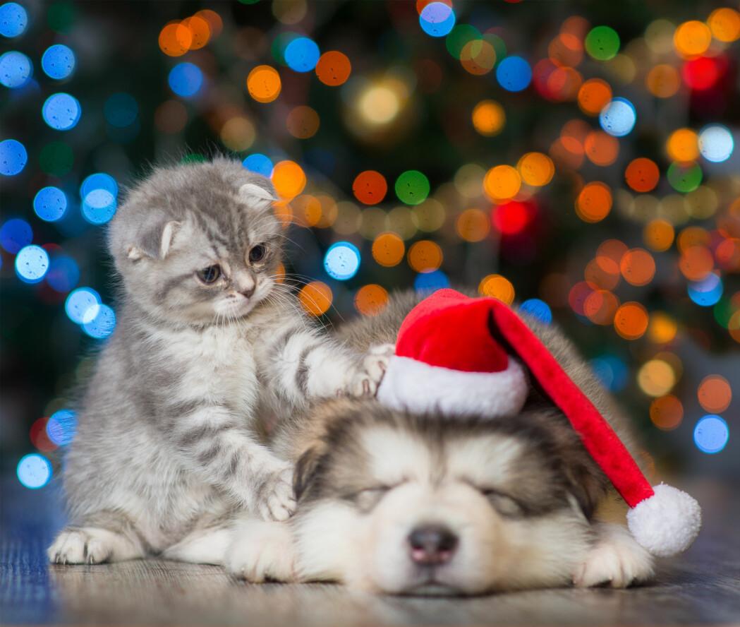 Dyrevelferd for hunder og katter handler framfor alt om livsglede. Overvekt hindrer dyrene i å få utfolde seg.