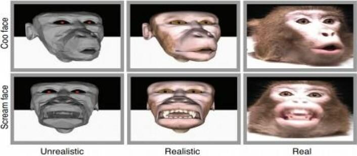 Apeansiktene ytterst til høyre og venstre var ikke apene redde for. Men de nestenrealistiske bildene i midten ville de ikke se på. (Foto: Fra den vitenskapelige artikkelen)
