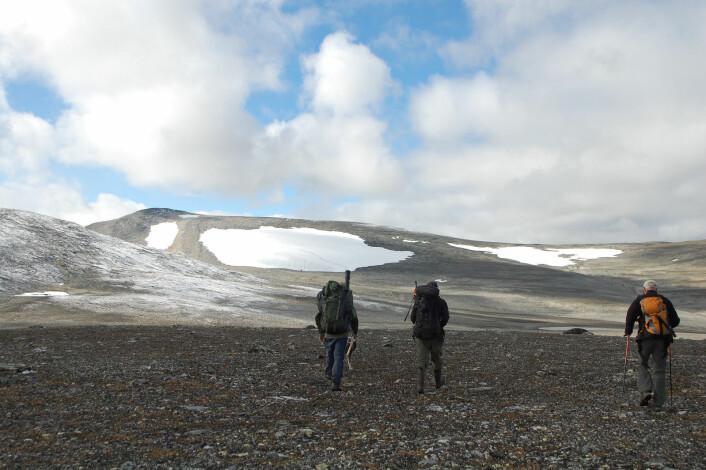 Oppdalsfjellene og Dovrefjell er de blant de områdene hvor det er gjort mange snøfonnfunn i Norge. (Foto: Martin Callanan)