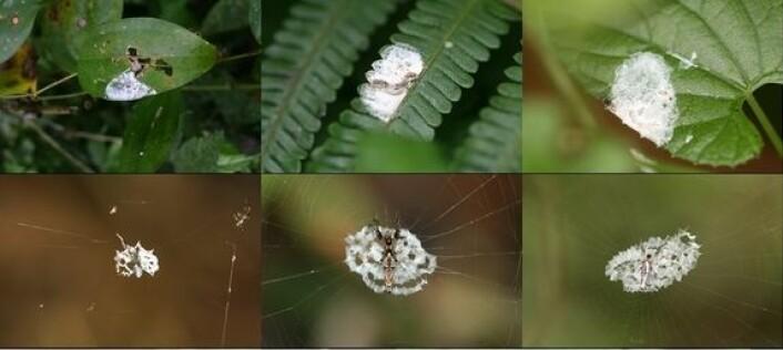 Jo, det er edderkopper. (Foto: Min-Hui Liu)