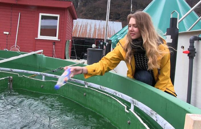 Brusflasker fylt med vann fungerer foreløpig som stand-in for levende fisk mens forsøksoppsettet i strømningskaret prøves ut. Når forsøkene kommer i gang, skal levende torsk svømme mot strømmen og havne i trålen. (Foto: Arnfinn Christensen, forskning.no)