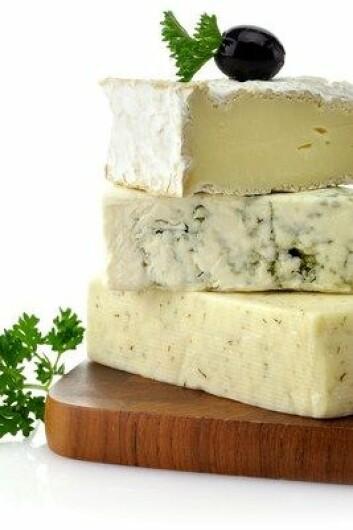 Ost kan være mange ting. I Danmark blir den tradisjonelt laget av melk fra kuer eller geiter. Melk fra griser kan teoretisk sett brukes til å lage ferskost, mens vanlig, fast ost blir vanskelig. (Foto: Colourbox)