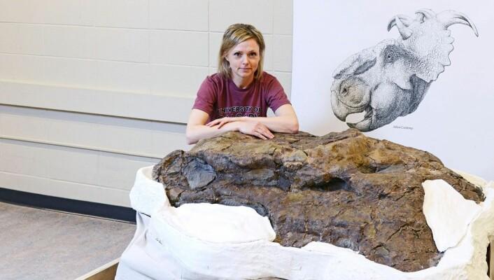 Paleontologen Darla Zelenitsky og det som trolig er den største pachyrhinosaurusen som er funnet. (Foto: University of Calgary)