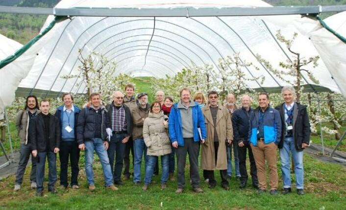 20 forskere fra 12 land i Europa besøkte nylig Bioforsk i Ullensvang til en samling om blomsterutvikling for moreller i Europa. (Foto: Roald Sørheim)