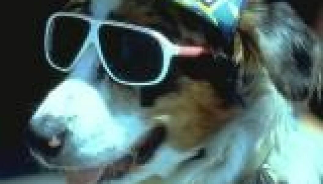 - Hunder er intenst sjalu skapninger