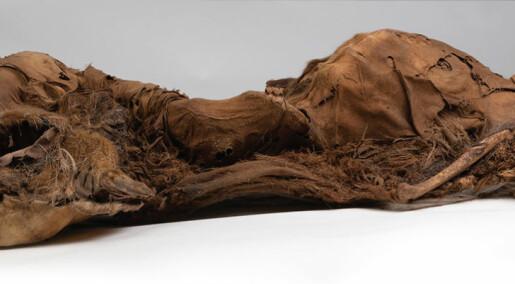 500 år gamle inuitt-mumier hadde åreforkalkning