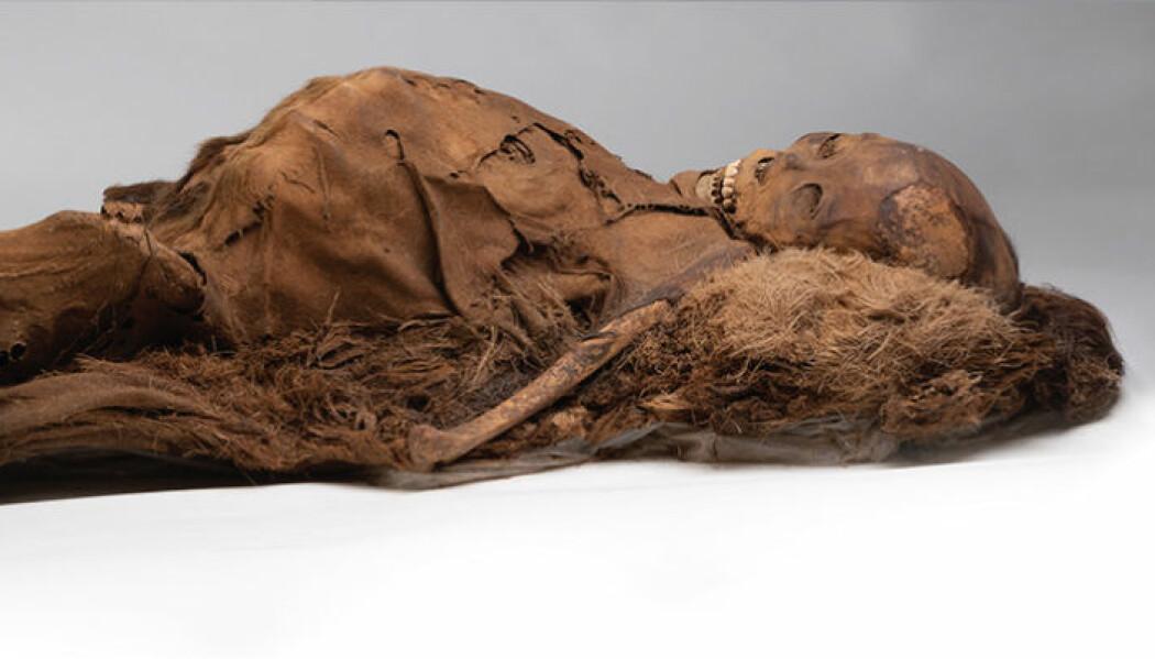 En av mumiene fra Grønland. Til tross for en aktiv livsstil og mye sjømat, hadde tre av fire mumier tegn til avleiringer i blodårene.