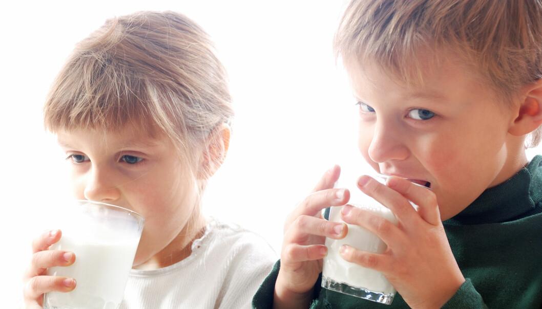 Helmelk inneholder dobbelt så mange kalorier som skummetmelk. Likevel ser det ikke ut til at barn som får helmelk er tykkere.