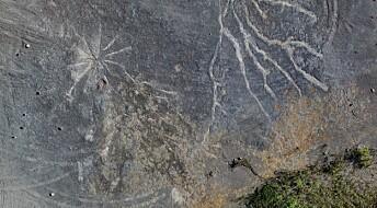 Er dette spor etter verdens eldste skog?