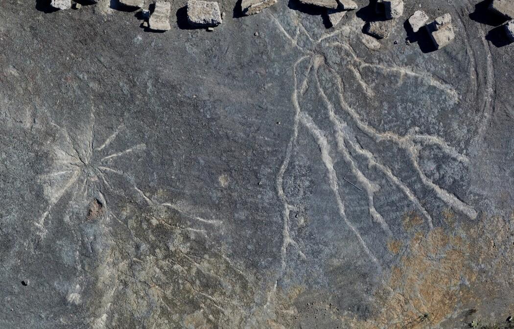 Disse fossile trerøttene er trolig 385 millioner år gamle.