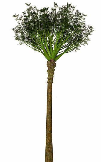 Eospermatopteris hadde naken stamme med greiner på toppen.