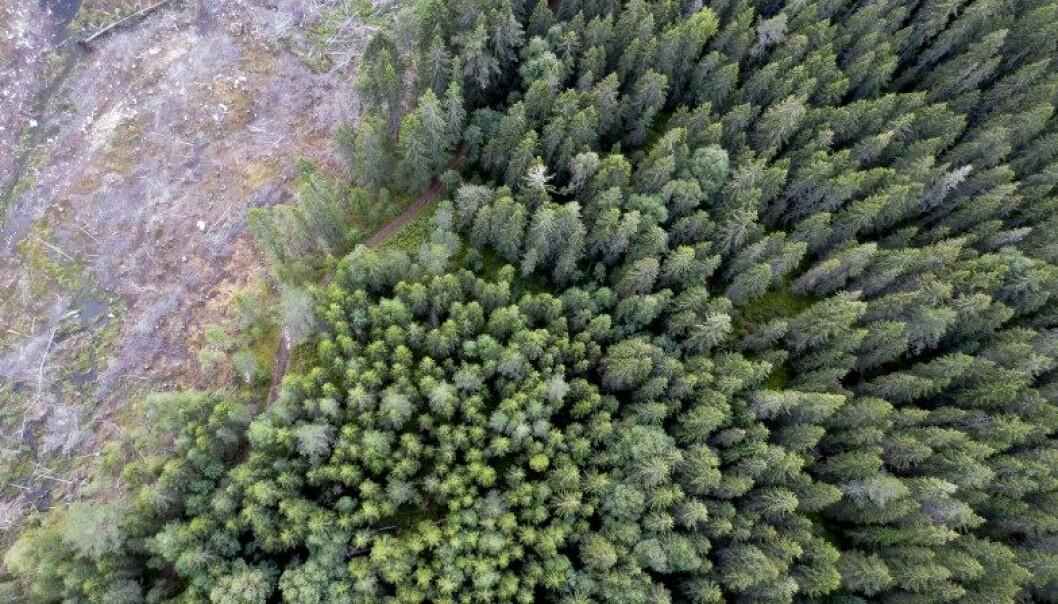 Et nytt samarbeidsprosjekt skal utvikle forslag og strategier for hvordan norske skoger best kan forvaltes for å tilpasse seg klimaendringene.