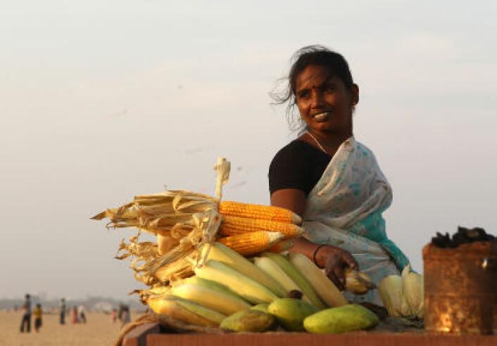 En kvinne selger mais på stranda ved Chennai i Sør-India. I det sørlige India snakkes dravidiske språk. De regnes ofte som eldre enn de indoeuropeiske språkene i nord. Genstudien er gjort blant dravidisk-talende. (Foto: iStockphoto)