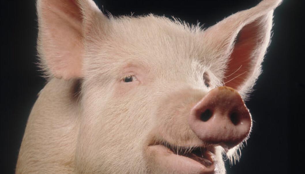Glade griser ser lysere på livet
