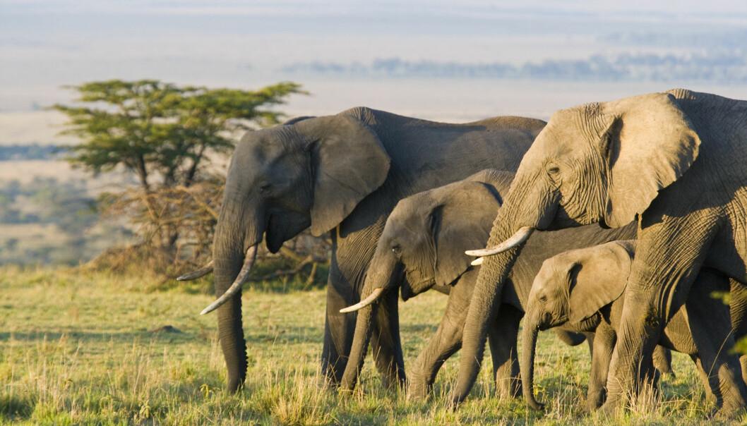 CITES er konvensjonen om internasjonal handel med truede arter av vill fauna og flora.