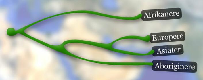 """Skjematisk framstilling av slektskapet mellom ulike nålevende folkegrupper. Aboriginere er etterkommere etter den første bølgen av utvandrere fra Afrika gjennom Asia. De fleste nålevende asiater stammer fra av en annen og seinere innvandringsbølge. Fra Morten Rasmussen et. al.: """"An Aboriginal Australian Genome Reveals Separate Human Dispersals into Asia"""" Science 22. september 2011. (Foto: (Illustrasjon: Per Byhring))"""