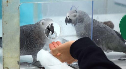 Papegøyen hjelper til, uten å få noe igjen for det